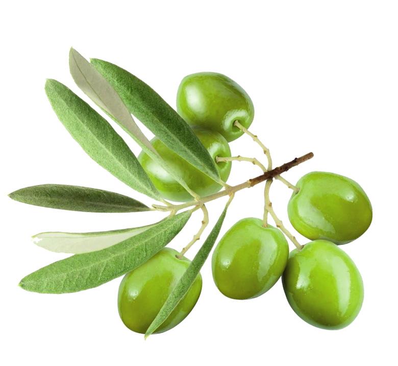 fertilsud-schede-colture_olivo