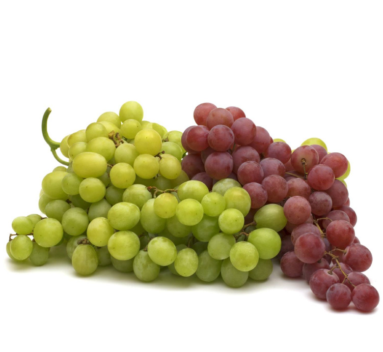 fertilsud-schede-colture_vite-vino