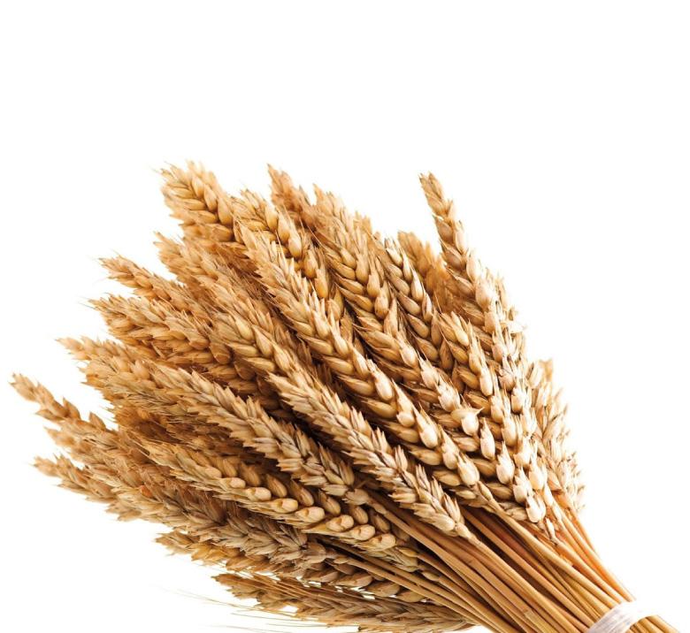 cereali fertilsud Wheat Border Black and White Wheat